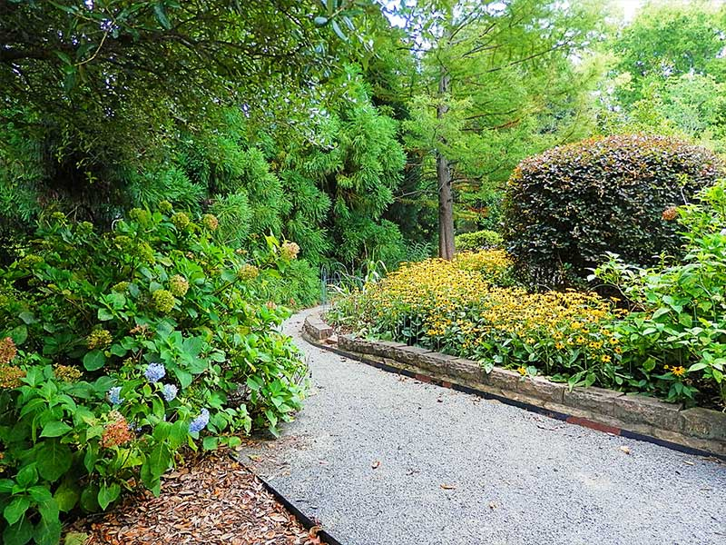 Path with Hydrangeas and Blackeyed | Americus Garden Inn near GSW