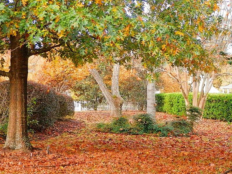 Northwest Yard Leaves | Americus Garden Inn Bed & Breakfast, Georgia